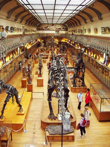 Jardin des Plantes - Galerie de Paleontologie