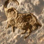 Ibex in Abri Pataud in Les Eyzies de Tayac Sireuil