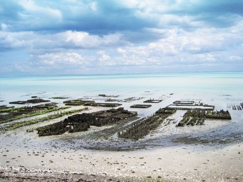 Cancale oyster beds
