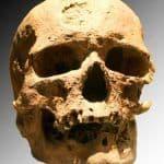 Cro Magnon skull - Cro Magnon Shelter