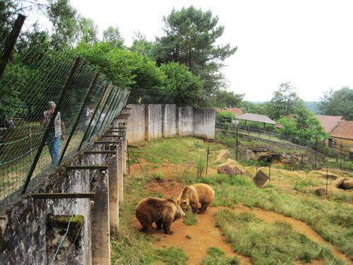 Brown bears enclosure at Le Regourdou