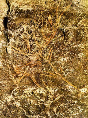Lascaux Cave abside