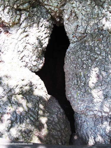 Chene a Guillotin in Broceliande - Hole where the priest hid