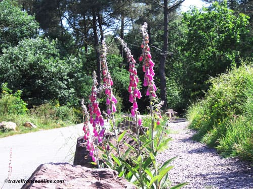 Trail in Foret de Broceliande