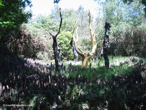 Or de Broceliande - Arbre d'Or protected by the standing stones
