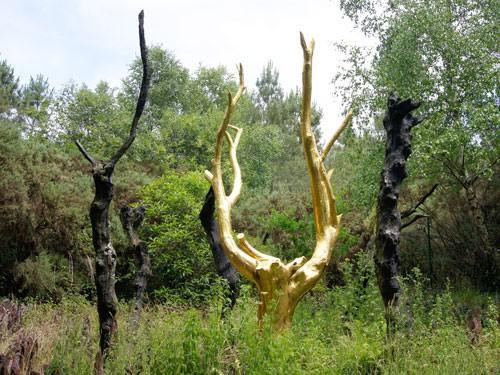 Or de Broceliande - Arbre d'Or in summer