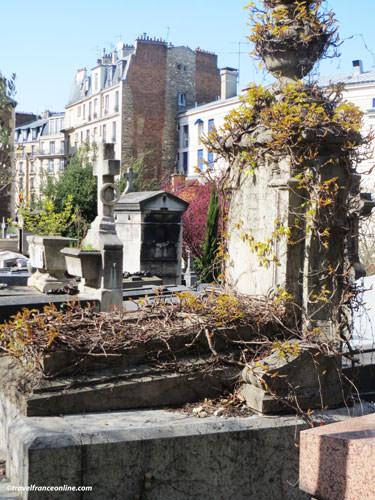 Saint-Vincent Cemetery - A wisteria on a grave