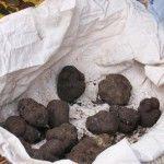 Black truffle from Perigord
