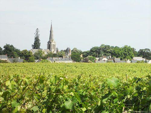Anjou-Saumur Vineyard - Savennieres vineyard