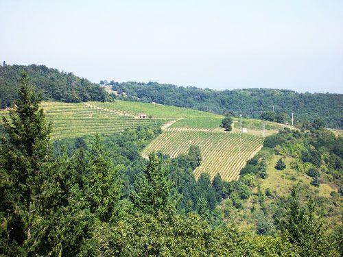 Auvergne Vineyard - Côtes du Forez vineyard