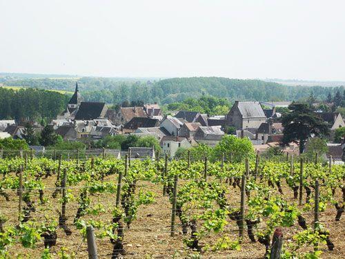 Centre-Loire Vineyard - Reuilly vineyard