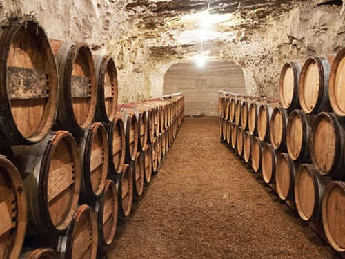 Touraine Vineyard - Wine cellar in Chinon