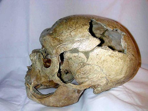 Neanderthal skull recovered in La Chapelle aux Saints