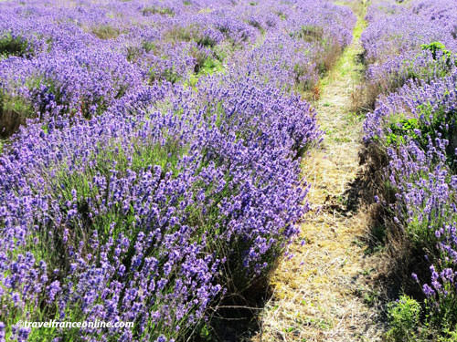 Traveling to Provence from the UK