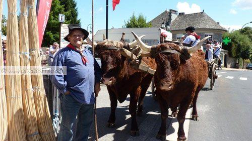 Fete des Paniers de Montsalvy - Salers cows