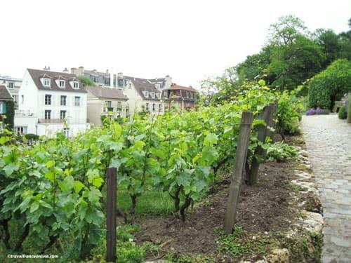 Grape Harvest Festival in Montmartre - Clos Montmartre