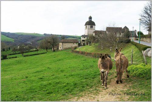Mourjou - La Chataigneraie in Cantal