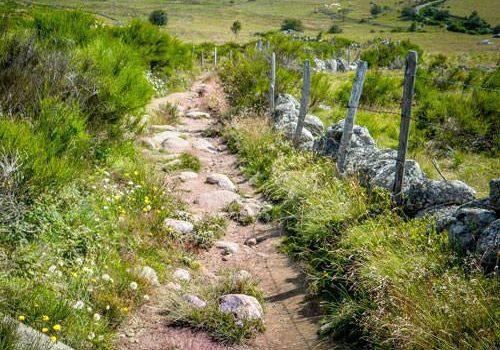Farm track in Aubrac