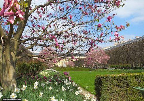 Palais-Royal gardens in spring