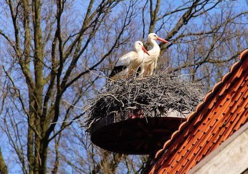 The stork that delivers babies - Storks nest on a platform